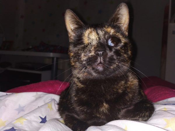 Foto posicion del Gato ciego